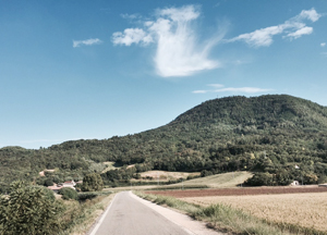 Italian forestry