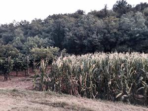 italian forestry 3
