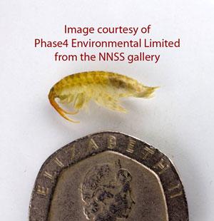 Invasion of the killer shrimps