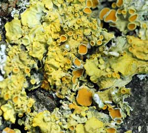 Introducing woodlandsTV videos on LICHENS