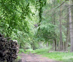 Woodland tracks and paths
