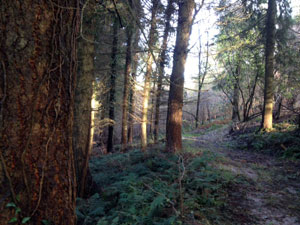 What's happening in the market for commercial woodlands?