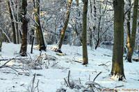 Seasons: Snow at Wickham Bishops