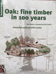 Growing fine Oak timber in 100 years in your woodland