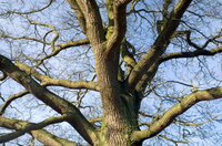 What Is Ancient Woodland?