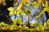 Seasons: Autumn Display at Oaters Wood