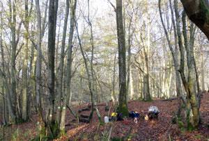 Creating Woodland Glades