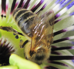 The birds and the bees,  insecticides and wildlife