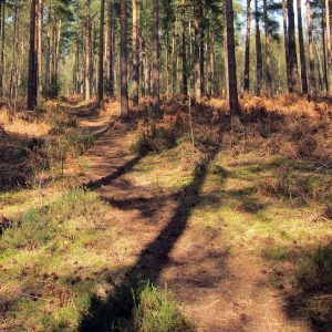 pine pathway