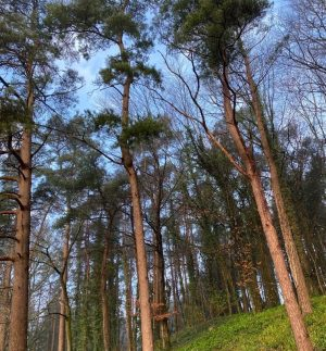 Can woodlands and forests 'overcome' drought?