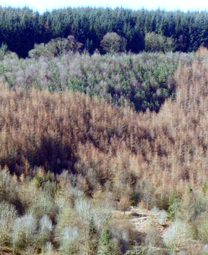 Woodlands and biodiversity