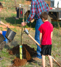 Planting a Tree - Part One