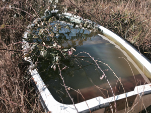 plastic boat in woodland