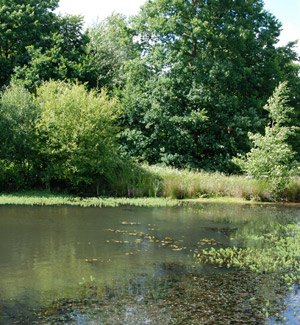 pond-in-woodland