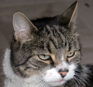 Cats as predators