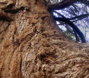 Bark, its nature and uses.