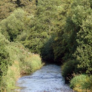 The national vegetation classification