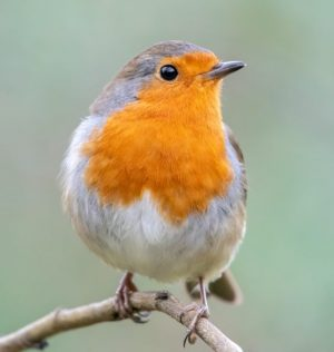 How does noise affect birds?