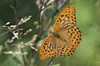 Butterflies and Woodlands