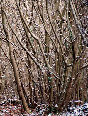 Coppice and dead wood