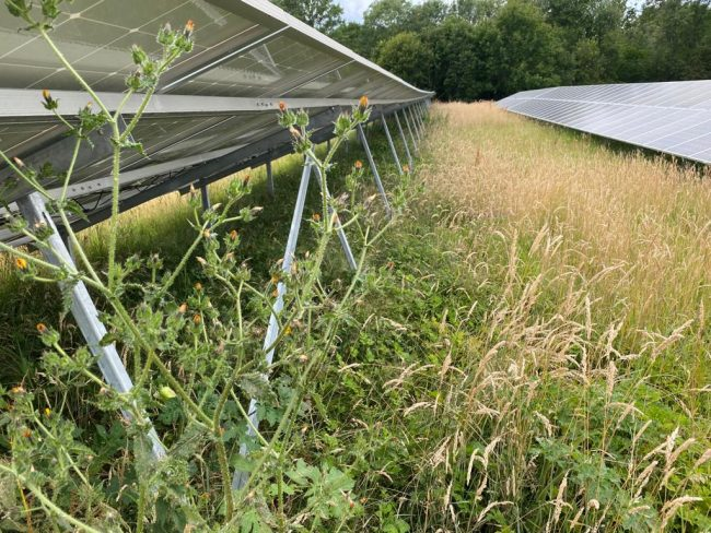 solar panels and wildlife