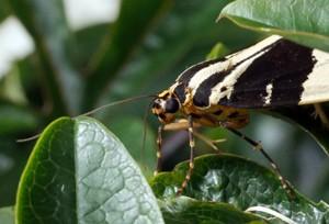 Changing moth populations.