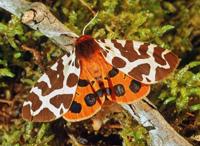Moths Count 2007