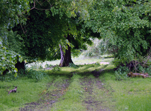 """""""The Old Ways"""" - a book about footpaths and ancient tracks"""