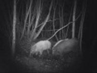 Trail Cameras - Woodland wildlife on camera