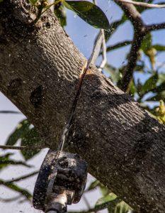 tree-pruning-2