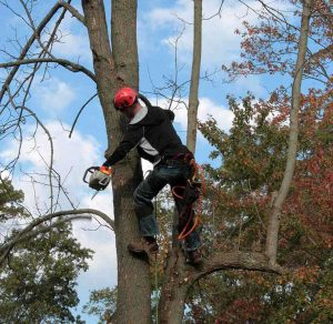 Tree Pruning with Chainsaw