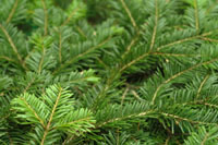 A Glossary of Tree Terms by The Royal Forestry Society