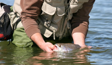 TROUT TICKLING TOO!