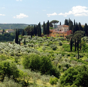 Tree growing in Tuscany