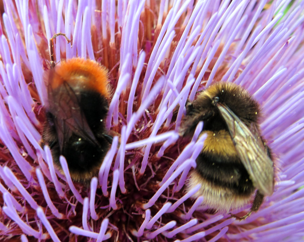 two-bees