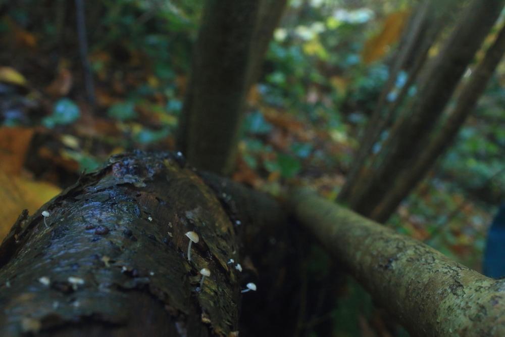 Bonnet on fallen tree trunk