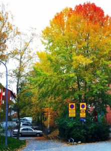 The benefits of trees in the urban landscape