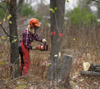 A Video Guide to Tree Felling Part 3 - Dealing with Hung Up Trees