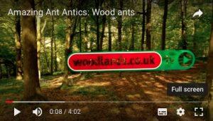 WoodAnts film