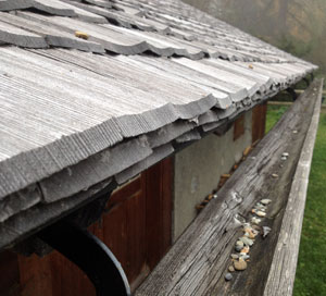 Wooden gutters, shingles and downpipes