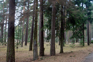 Woodland burials on a grand scale