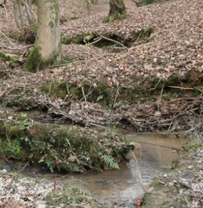 Nitrates, land use and fresh water systems.