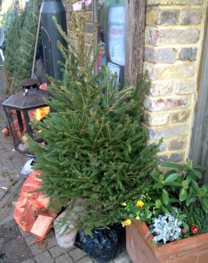 Which President Banned Christmas Trees From The White House.The Woodlands Co Uk Christmas Tree Quiz Woodlands Co Uk