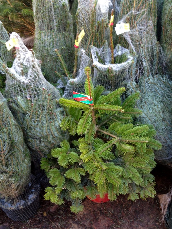 xmas tree 3